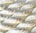 3 Strand twisted polyester rope